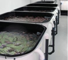 ABT's fish farm facility