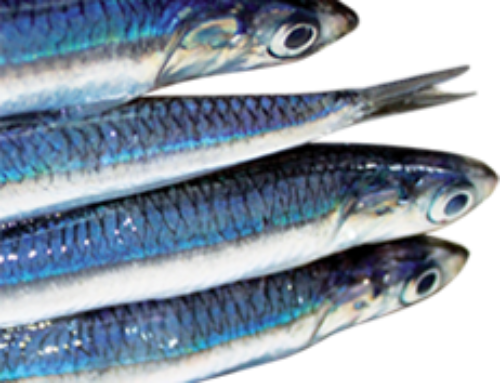 Anchovy collagen